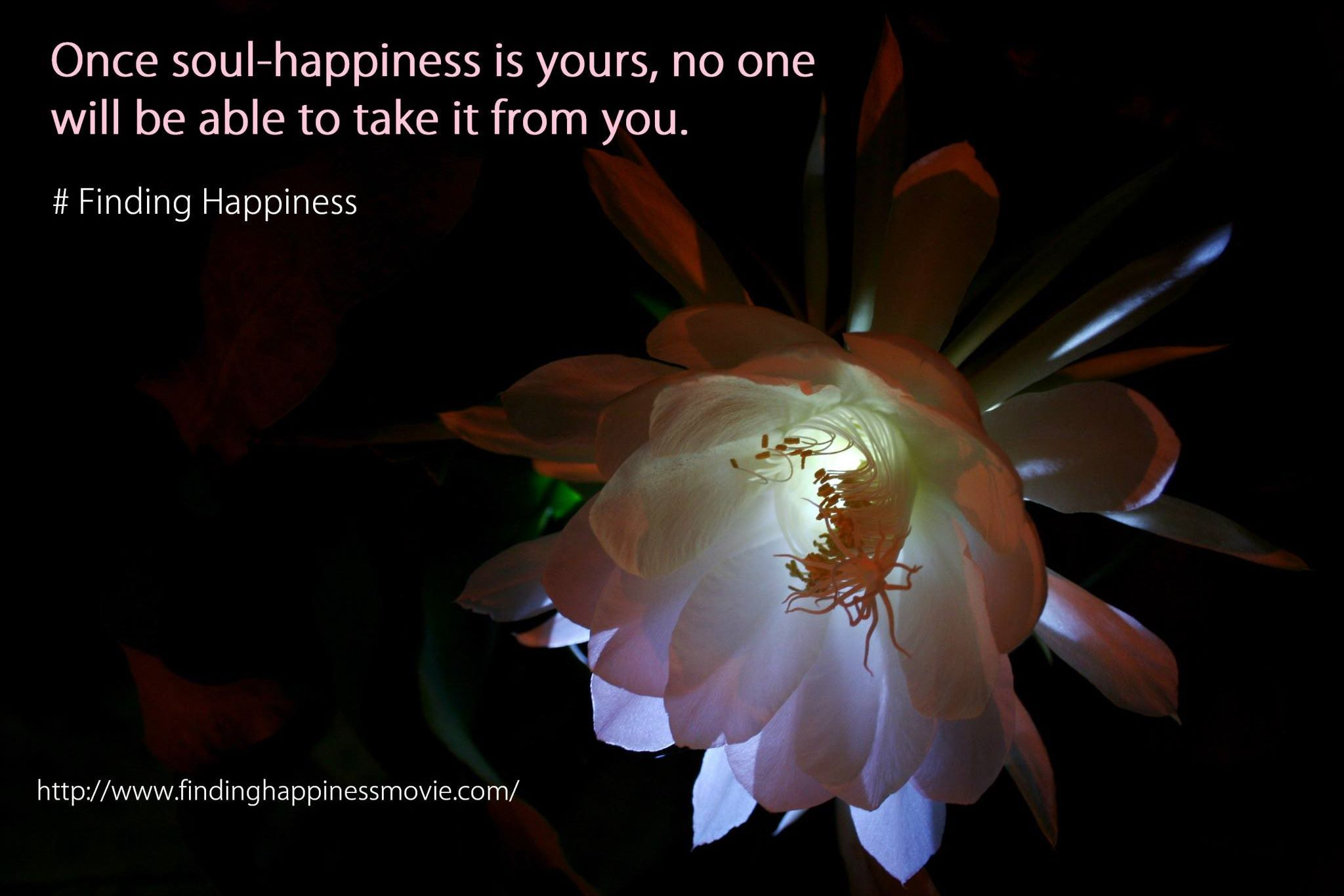 Happy Quotes: Find Your Happiness: Top 7 Tips For How To Be Happy